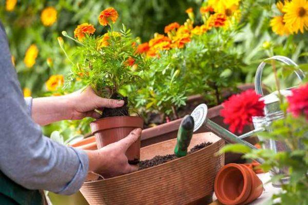 Taller-de-jardineria